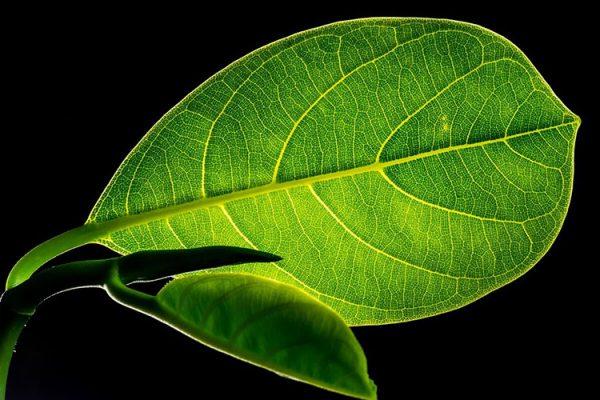La célula vegetal: estructuras, funciones y sus partes