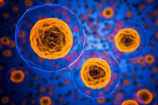 Qué es la célula: estructura, tipos y funciones