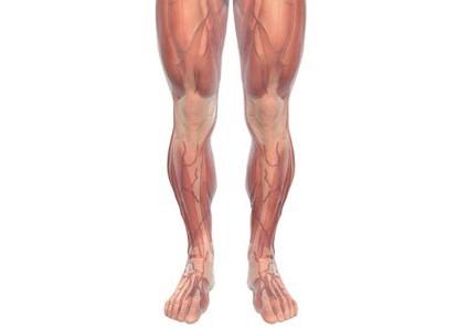 músculos de la pierna